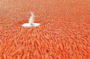 Bunny heaven