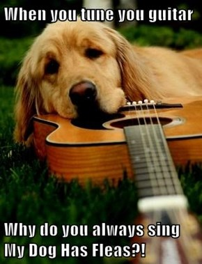 When you tune you guitar  Why do you always sing My Dog Has Fleas?!