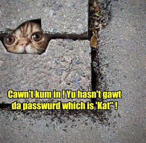 "Cawn't kum in ! Yu hasn't gawt da passwurd which is 'Kat"" !"