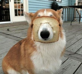 Bread Corgi