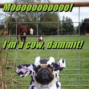 Mooooooooooo! I'm a cow, dammit!