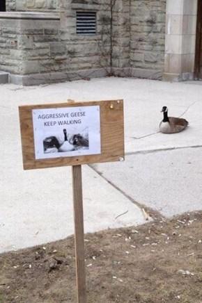 Exhibit A, the Carnivorous Goose