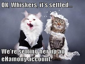 OK, Whiskers, it's settled...  We're setting her up an eHamony account.