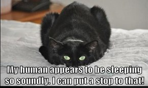 My human appears to be sleeping so soundly. I can put a stop to that!