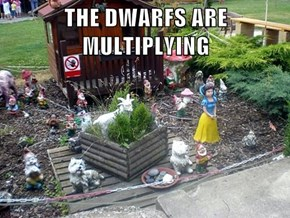 THE DWARFS ARE MULTIPLYING