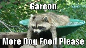 Garçon  More Dog Food Please