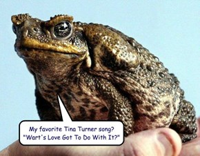 "My favorite Tina Turner song?  ""Wart's Love Got To Do With It?"""