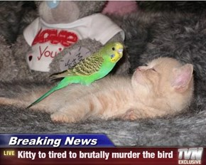 Breaking News - Kitty to tired to brutally murder the bird
