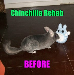 Chinchilla Rehab