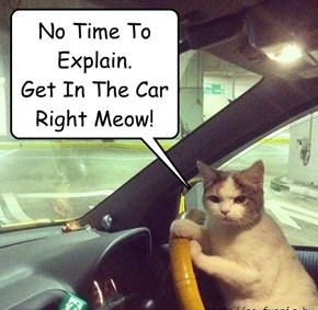 No Time To Explain.  Get In The Car Right Meow!