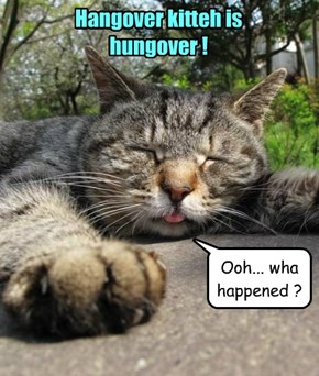 Hangover kitteh is hungover !