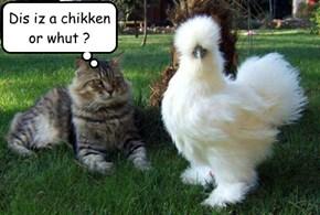 Dis iz a chikken or whut ?