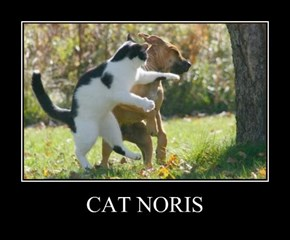 CAT NORIS