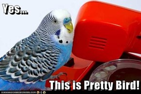 Yes...  This is Pretty Bird!