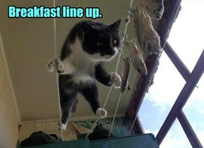 Breakfast line up.
