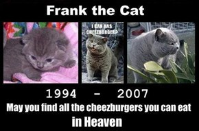 R.I.P The Original Lolcat