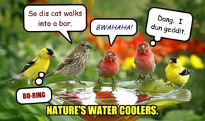 NATURE'S WATER COOLERS.