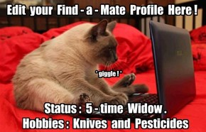 Why Cat Owners Don't Have Much Luck on Social Sites