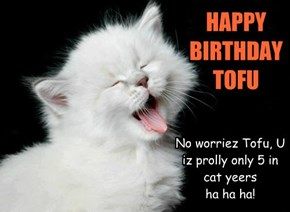 No worriez Tofu, U iz prolly only 5 in cat yeers    ha ha ha!