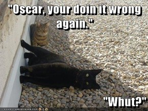 """Oscar, your doin it wrong again.""  ""Whut?"""