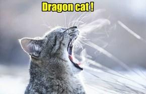 Dragon cat !
