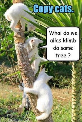 Whai do we allas klimb da same tree ?