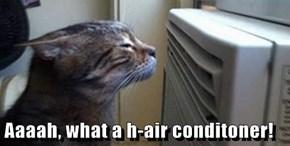 Aaaah, what a h-air conditoner!