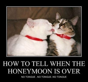 HOW TO TELL WHEN THE HONEYMOON IS OVER
