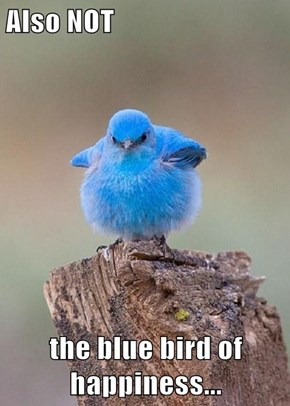 Also NOT  the blue bird of happiness...