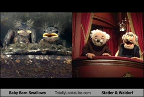 Baby Barn Swallows Totally Looks Like Statler & Waldorf