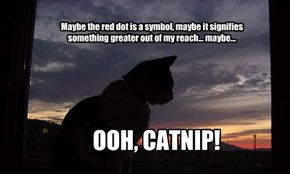 Deeper meaning cat lost it again.