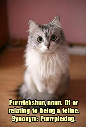 Purrrfekshun, noun.  Of  or relating  to  being a  feline.  Synonym:  Purrrplexing.