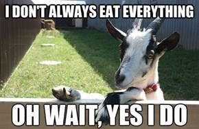 The Most Interesting Goat