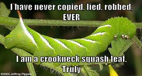 I have never copied, lied, robbed,  EVER  I am a crookneck squash leaf.                                                   Truly
