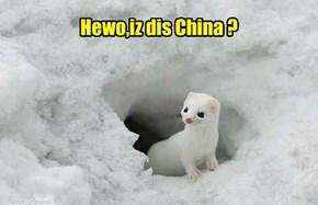 Hewo,iz dis China ?