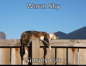 Warm Sky  Simply Cat