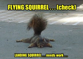 FLYING SQUIRREL . . . (check)