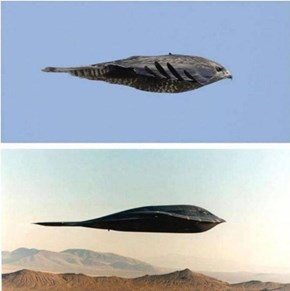 This Bird Totally Looks Like a B-2 Bomber