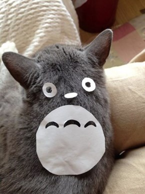 My Kitty Totoro