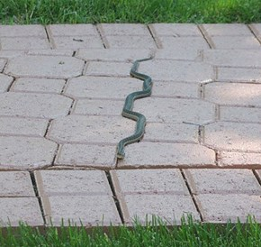 This Snake Might Have a Touch of OCD