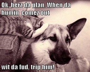 Ok, herz da plan. When da humin  comez out  wit da fud, trip him!