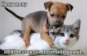 Meny meny  MENY lessons ta leern, litle goggie.
