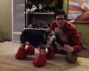 Boxer Pup, He's a Southpaw