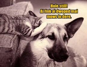 Hole still!  Ai fink ai dwoped mai  mows in dere.