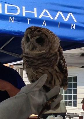 Schmoo, the Blind Owl