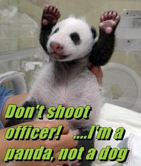 Don't shoot officer!    ....I'm a panda, not a dog