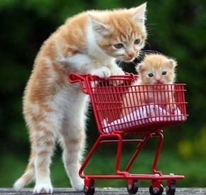 Going Shopping for Squees