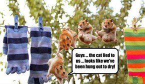 Guys ... the cat lied to us ... looks like we've been hung out to dry!