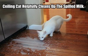 Ceiling Cat Helpfully Cleans Up The Spilled Milk.