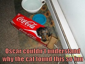 Oscar couldn't understand why the cat found this so fun